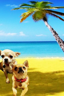 Two Chihuahuas bathing in the sun under a palm tree